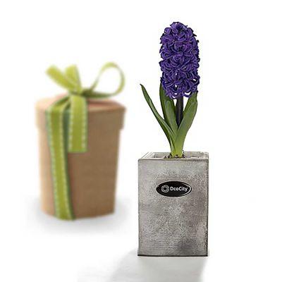گلدان Dco4 دکوسیتی
